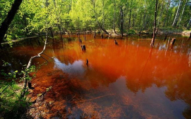 jezioro_antropogeniczne_luk_muzakowa_park